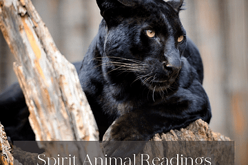 ShaaniCreates Spirit Animal Reading