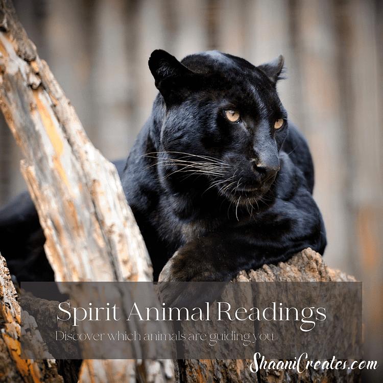 ShaaniCreates Spirit Animal Reading